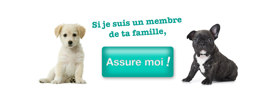 Comment punir son chien